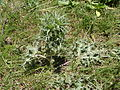 Plant 1753.JPG