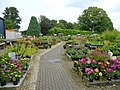 Plant sales area - geograph.org.uk - 876821.jpg
