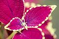 Plantlife (207412284).jpg