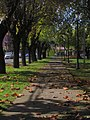 Plaza San Francisco, Curico (33870321541).jpg