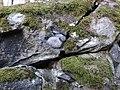 Plungės lurdas, mitologinis akmuo.JPG