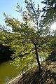 Pond @ Parc Montsouris @ Paris (30121128836).jpg