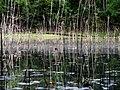 Pond Cameron NC 3858 (15568924680).jpg