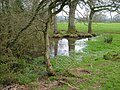 Pond near Mattocks - geograph.org.uk - 154662.jpg