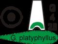 Poster galanthus platyphyllus.png