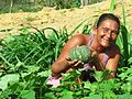 Produção Agroecológica.JPG