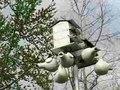 File:Progne subis -Tulsa, Oklahoma, USA -nestboxes-8.ogv