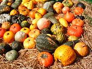 Pumpkins Aachen.JPG