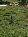 Pusat Latihan Gajah Riau 06.jpg