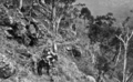 Queensland State Archives 412 The bridle path Stockyard Creek Lamington National Park Beaudesert Shire September 1933.png