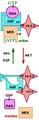 RAF kinases 14-3-3 diagram.png