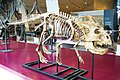 ROM 55 - Protoceratops (14172933009).jpg