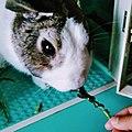 Rabbit pet.jpg