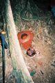 Rafflesia kerrii meijer.jpg