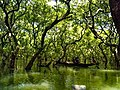 Ratargul Swamp Forest-3.jpg