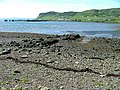 Remains of Old Pier - geograph.org.uk - 186220.jpg
