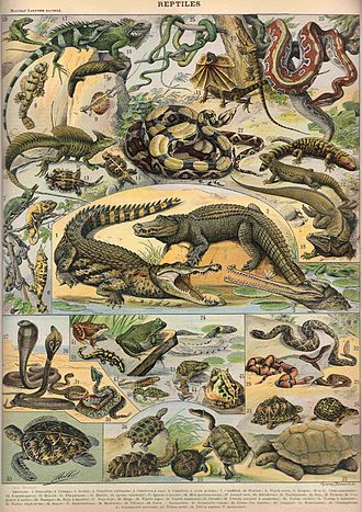 Reptile - Reptiles, from Nouveau Larousse Illustré, 1897-1904: Notice the inclusion of amphibians (below the crocodiles).