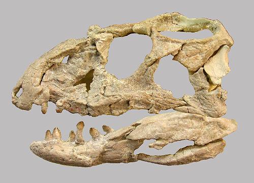 Revueltosaurus