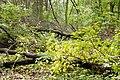 Rezerwat przyrody Morysin, park 2.jpg