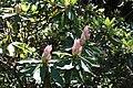 Rhododendronpark Bremen 20090513 125.JPG