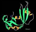 RibonucleaseA ribbon 7rsa.jpg
