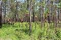 River Creek WMA sample of trees.jpg