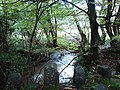 River Deer at Chilsworthy - geograph.org.uk - 602338.jpg