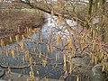 River Dove - geograph.org.uk - 362814.jpg