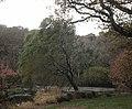 Rosemoor Gardens - geograph.org.uk - 1408143.jpg