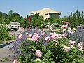 Roses at the U.S. Botanic Garden (14655553152).jpg
