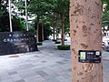 SZ 深圳 Shenzhen 羅湖 Luohu 寶安南路 Bao'An South Road tree Terminalia mantaly August 2018 SSG 01.jpg