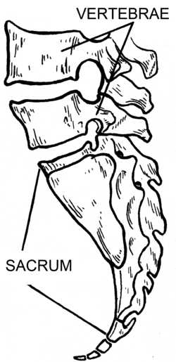 Sacrum (PSF).png