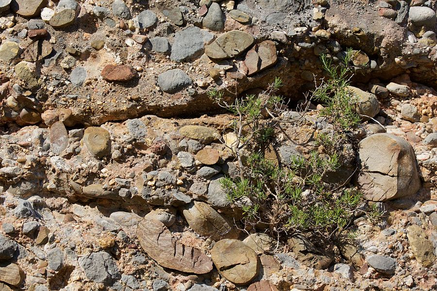 """An outcrop of """"Conglomerate  of the Galante"""" in the Sainte-Victoire Massif near Puyloubier,  Bouches-du-Rhône, France. This rock formation is of Danian age, the oldest part of the Paleocene epoch, about 62 million years old."""