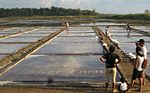 Saltfarm.jpg