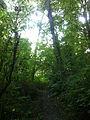 Saltwater State Park Trail 5.jpg