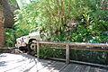 San Diego Zoo Safari Park 139 2014-08-29.JPG