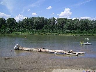 Csongrád - Sandbank of the Tisza river near Csongrád.