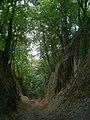 Sandomierz-wawoz-lessowy.jpg