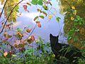 Saphiri the cat by zenera-01.jpg