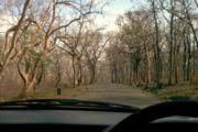 Sathyamangalam Sathyamangalam Forest | RM.