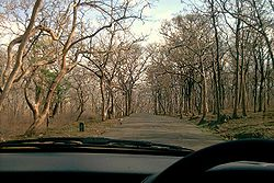 A drive through Sathyamangalam Forest
