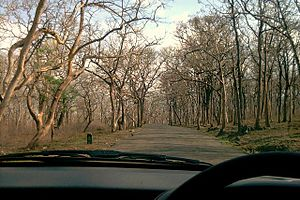 Sathyamangalam - A drive through Sathyamangalam Forest