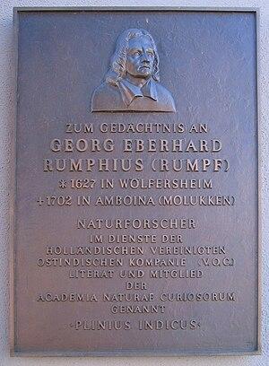 Georg Eberhard Rumphius - Memorial plaque in Wölfersheim