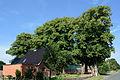 Schleswig-Holstein, Drage, Naturdenkmal NIK 8033.JPG