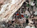 Schmetterling butterfly woods.jpg