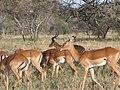 Serengeti National Park-108467.jpg