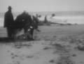 SevenMileBeach1946.png