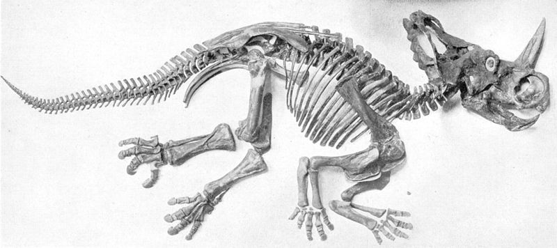 File:Sharp naturalhistory1920 monoclonius.jpg