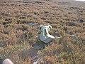 Sheephead - geograph.org.uk - 85600.jpg