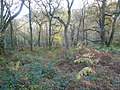 Shining Cliff Woods - geograph.org.uk - 1188747.jpg